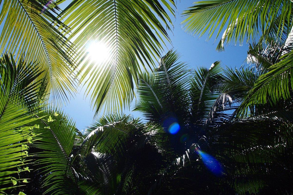 moniquedecaro_seychelles_13