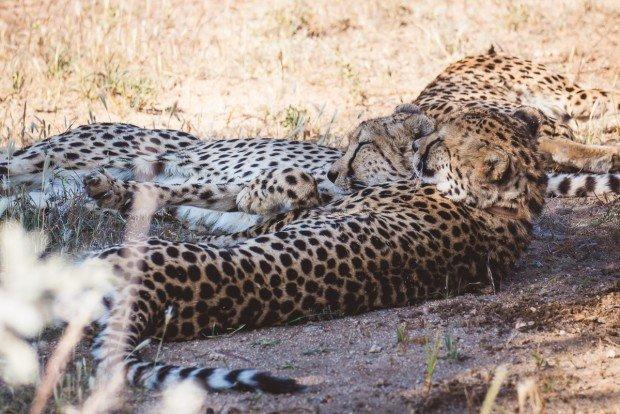 moniquedecaro_namibia-8306