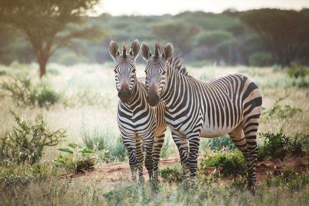 moniquedecaro_namibia-8591