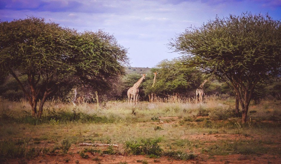 moniquedecaro_namibia-9889