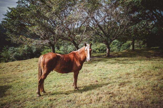 moniquedecaro-hog-hollow-3761