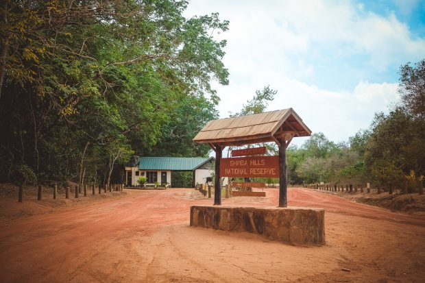 moniquedecaro-shimba-hills-6844